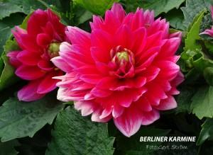 Berliner Karmine