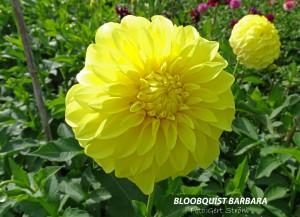 Bloomquist Barbara