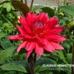 Claudias Herbsttraum