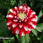 Hapet Austria Flag