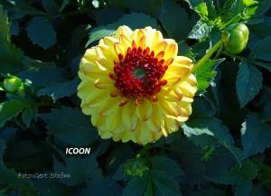 Icoon