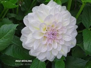 Inge Wehling