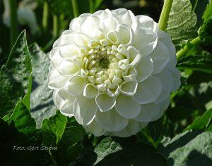 Orsett Beauty