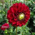 Rotball