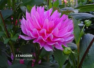 St. Aegiden