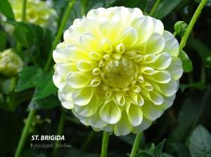 St. Brigida