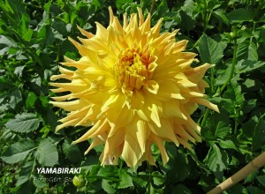 Yamabiraki
