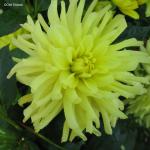 Yellow Happiness